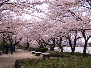 高松公園(高松の池)